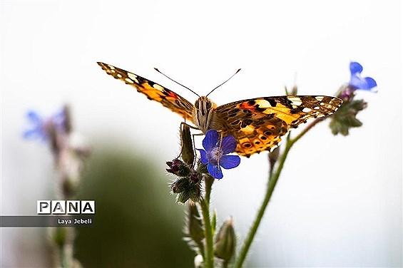 بازگشت پروانهها به تهران