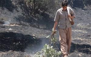 آتش گرفتن  روزانه جنگلها و مزارع ایلام