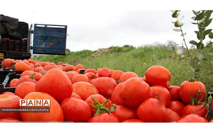 نخستین جشنواره شکرگزاری گوجه فرنگی در میناب برگزار می شود