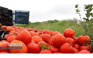 روند کاهشی قیمت گوجه فرنگی در بازار