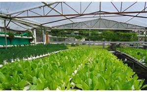افتتاح 98 پروژه کشاورزی با اعتبار 1250 میلیارد ریال در آذربایجانشرقی