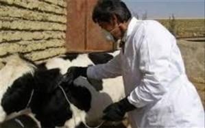واکسیناسیون ١۵ هزار راس دام در سیستان