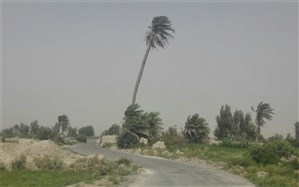 قدیمی ترین درخت خرمای سیستان بر زمین افتاد