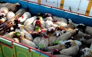 علت قاچاق دام ، ارزان بودن قیمت دام و گوشت در داخل کشور است