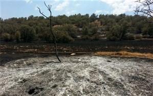 دادستانی: کشت خشخاش در جنگلهای فارس کذب است