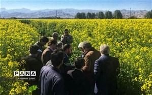 افزایش دو برابری تولید دانه روغنی کُلزا در شهرستان مُهر