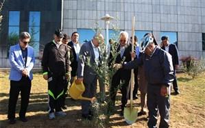 کاشت نهال صلح و دوستی در سازمان حفاظت محیط زیست