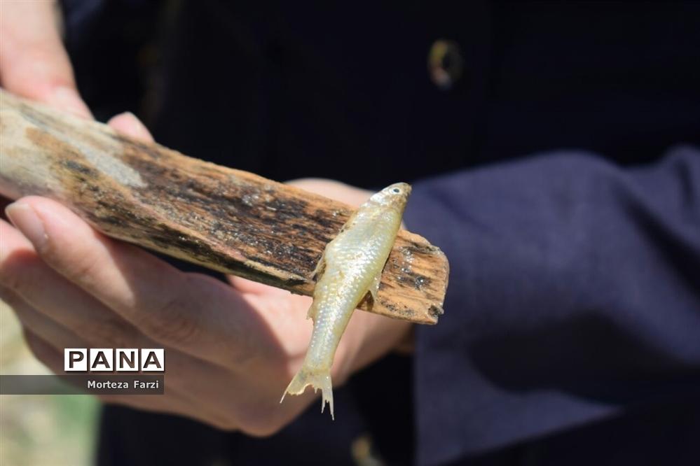 اولین جشنواره ماهیگیری با قلاب در سد سهند هشترود
