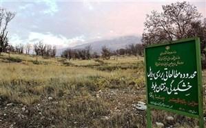 جنگلهای انبوه غرب ایران هم در حال بیابان شدن هستند