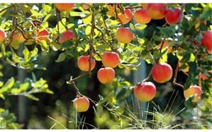 وجود بزرگترین مجتمع باغات کشور در استان اردبیل