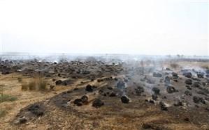 آتشسوزی پناهگاه حیات وحش میانکاله مهار شد
