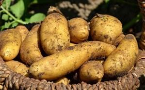 افزایش قیمت سیبزمینی در ارومیه موقتی است