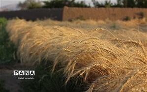 قیمت خرید تضمینی محصولات زراعی اعلام شد