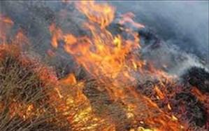 مهار کامل آتش در عرصه های منابع طبیعی دهمورد شهرستان بختگان
