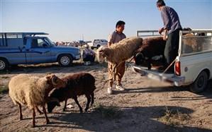 خروج دام زنده به اشتغال و تنظیم بازار آذربایجان غربی لطمه می زند
