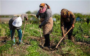 مازندران جزو استانهای پرخطر مصرف سم در محصولات کشاورزی نیست