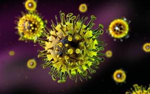 تاثیر یک ویروس سرماخوردگی شایع بر درمان سرطان مثانه