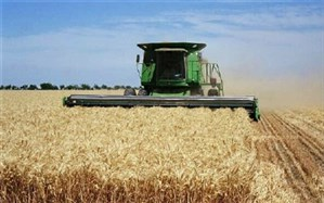 رئیس جهاد کشاورزی شهرری خبر داد:افزایش پنج درصدی برداشت گندم در شهرری
