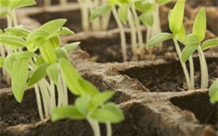 توسعه کشت گیاهان دارویی گامی برای حفاظت از گونههای متعدد