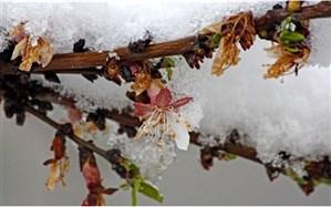 سرمای دیررس بهاره سالجاری 1750 میلیارد تومان به باغات آذربایجان شرقی خسارت وارد کرد