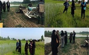 اجرای طرح های تحقیقی و ترویجی زراعی و باغی گیلان