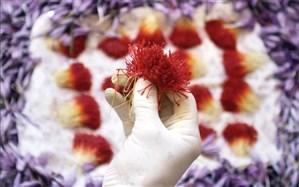 بزرگترین صادرکننده زعفران سال97 در این صنعت وجود خارجی ندارد