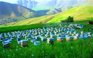 کوچ زنبورداران گیلانی از مناطق قشلاقی به ییلاقی