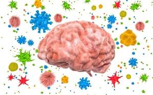 نقش باکتری روده در حفاظت از مغز و سیستم عصبی مرکزی