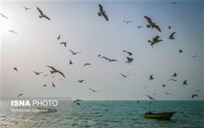 زیستگاههای حساس ساحلی و دریایی کشور معرفی میشوند