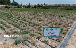 گیاهان دارویی و آبیاری تجمیعی به کمک دریاچه ارومیه میآیند