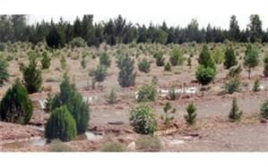 آغاز عملیات تولید بیش از ۳ میلیون اصله نهال در استان اردبیل