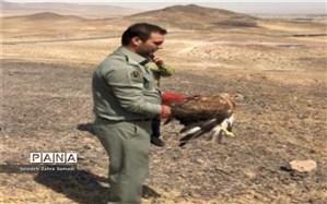 رهاسازی گونه های حیات وحش در طبیعت شهرستان ملارد