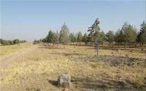 جنگل ۹۶ هکتاری در شهر جدید هشتگرد ساماندهی می شود.