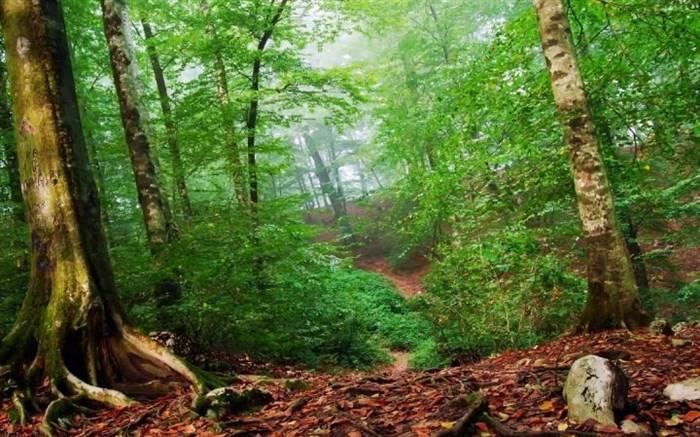 حفاظت از جنگل