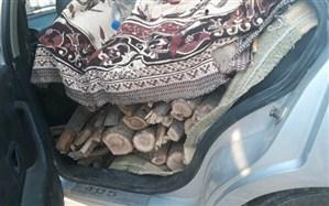 توقیف دو خودروی حامل هیزم قاچاق در شهرستان بویراحمد