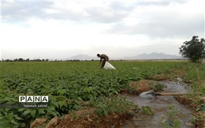 کشاورزی در کم آبی با طعم غیرت