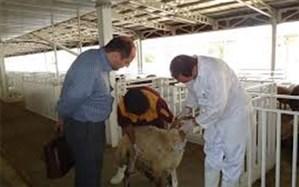 مراکز عرضه بهداشتی دام تهران تاسوعا و عاشورا فعال هستند