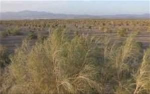 بیابانزایی تهدید جدی برای محیط زیست ، سلامت، تولید و اشتغال درملارد