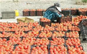 عبور تولید گوجه فرنگی درملارد ازمرزشش برابر متوسط کشوری