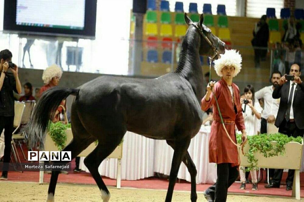چهارمین جشنواره بزرگ اسب اصیل ترکمن پایتخت درملارد