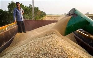 مجری طرح گندم: ۳۸درصد برنامه کشت گندم محقق شد