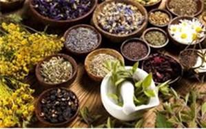 رئیس سازمان جهاد کشاورزی خراسان جنوبی : نگاه ویژه به گیاهان دارویی
