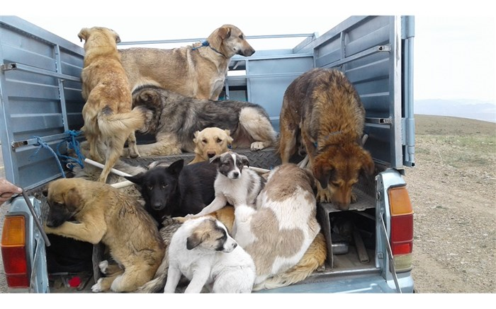 توضیحات شهرداری تهران در مورد کشتار سگها با آمپول اسید + ویدئو