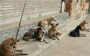 مدیریت پسماند؛ مهمترین راهکار کنترل جمعیت سگهای ولگرد