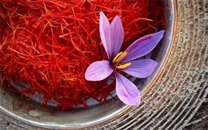 زیان ۴ میلیون تومانی زعفران در هر کیلوگرم محصول