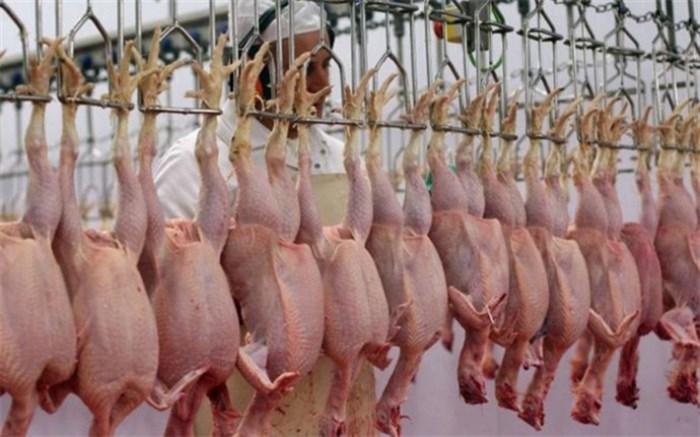 پلمب دو کشتارگاه مرغ در کرج