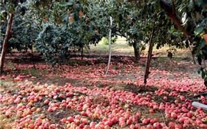 جولان دلالان در بازار میوه