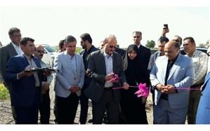 یک طرح پرورش گاو شیری در شهرستان قزوین افتتاح شد