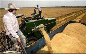 9.5 میلیون تن گندم از کشاورزان خریداری شده است