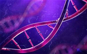 آیا طلاق گرفتن در DNA وجود دارد؟+ فیلم